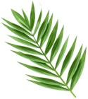 The page with this image: Palm Branch Transparent Image,is on this link