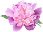 The page with this image: Peony Clip Art Transparent Image,is on this link