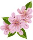 The page with this image: Spring Cherry Blossom Flowers PNG Clip Art Image,is on this link
